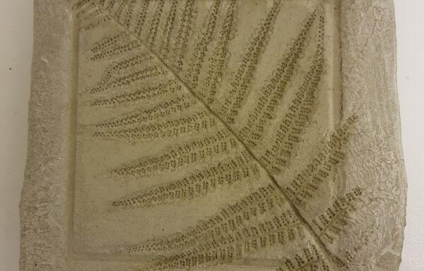 Pfanzenabdruck Quadrat mit Rand